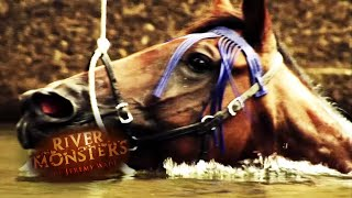 the-horse-attack-mystery-river-monsters