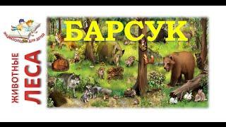 Видео - Энциклопедия для детей. Животные Леса. БАРСУК