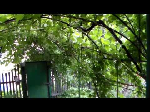 Виноградная арка - комфорт и уют