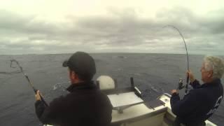 shimano stella sw8000 & tyrnos Portland tuna gopro