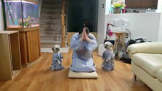 Phật pháp nhiệm mầu, hąi aฑh eṁ chó c๐n lạy Phật giỏi nhất thế giới/two d๐gs koẁtoẁ Amiтabha Buddha