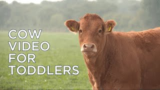 Fun Cow Video for Toddlers - Educational Science and Animals Movies for Kids