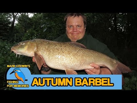 Barbel Fishing On The River Loddon - Morning & Evening Short Sessions (Video 77)