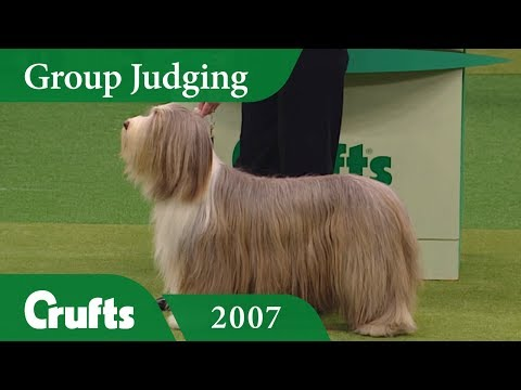 Bearded Collie wins Pastoral Group Judging at Crufts 2007