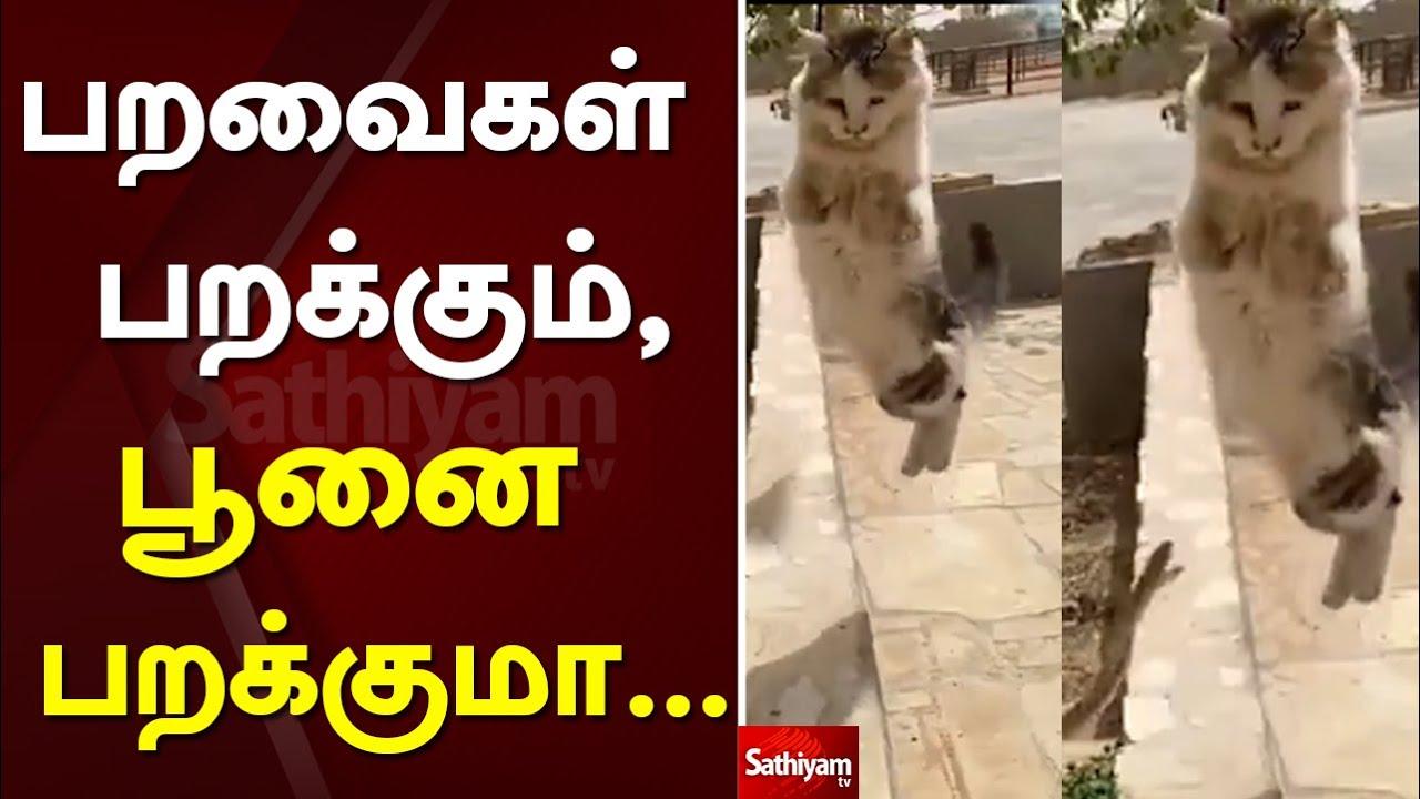 பறவைகள் பறக்கும், பூனை பறக்குமா……   Web Exclusive   Cat   snake   sathiyam tv
