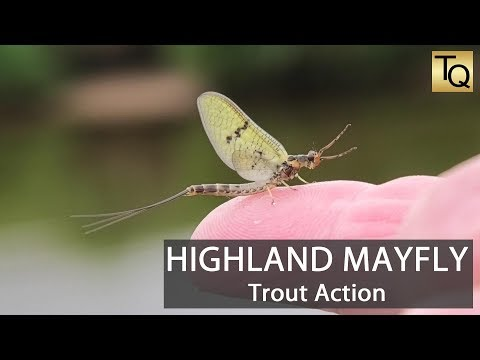 Fly Fishing For Trout In Scotland - Highland Mayfly Hatch