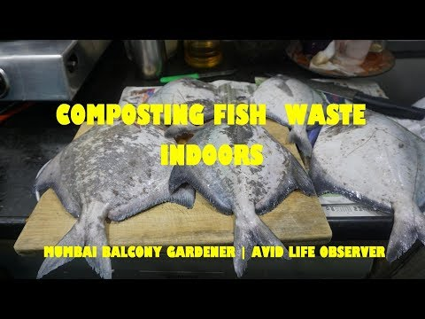 Composting Fish Waste Indoors | Apartment Composting In Mumbai