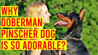 Doberman Pinscher Dog Breed, What Makes It An Adorable Breed
