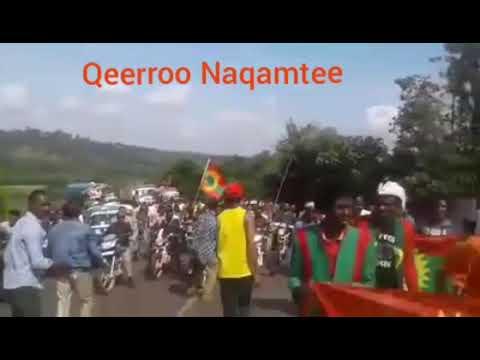 Qeerroo Naqamtee Yeroo Magaala Baakkoo ganee.