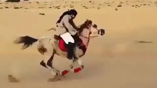 Самый Быстрая Лошадь в мире