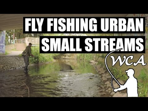 Fly Fishing For Wild Brown Trout In Small Urban Streams - River Lowman, Tiverton, Devon