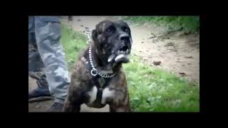 Спецрепортаж. По Україні домашні собаки продовжують нападати на людей