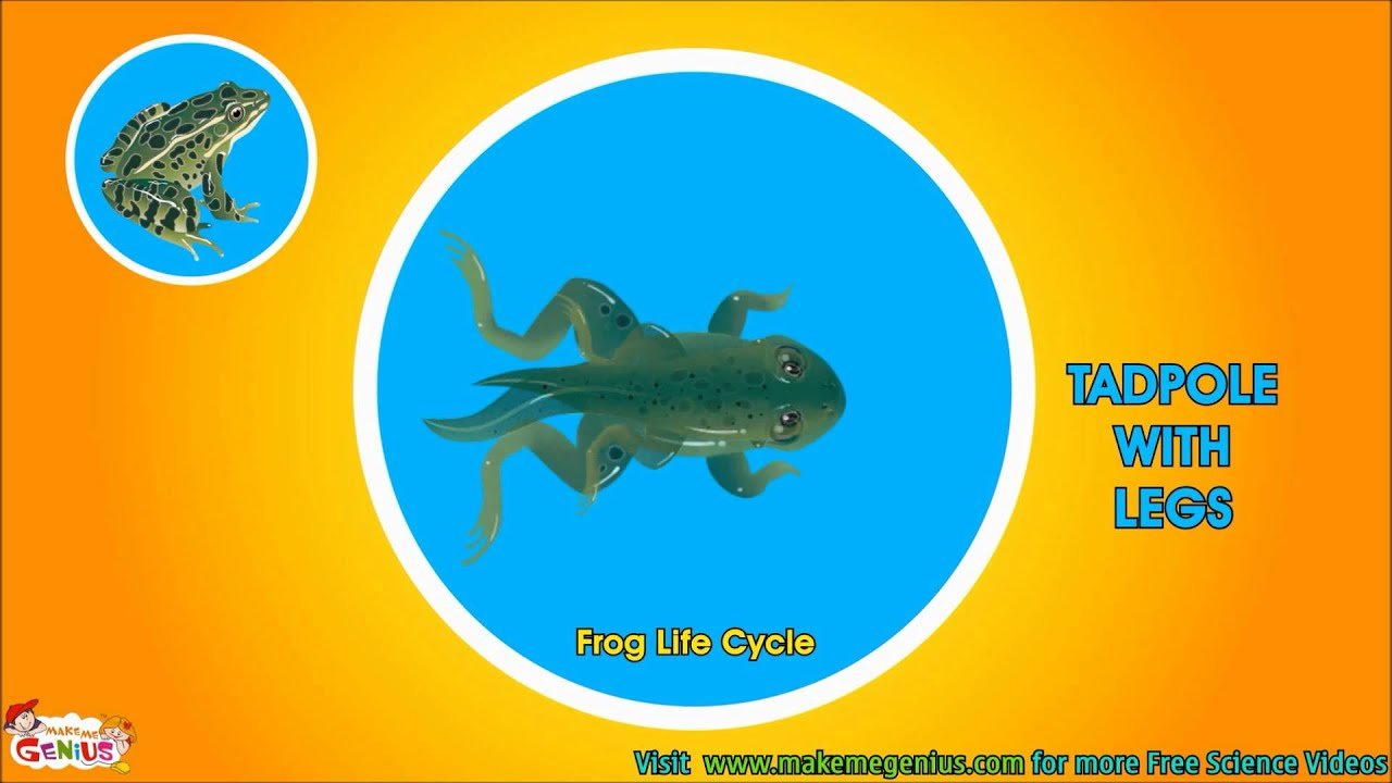 frog life cycle video for kids science for kids by makemegenius