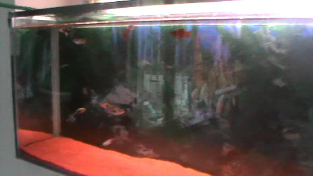 Filtro acquario fai da te semplicissimo n4 diy aqu youtube for Filtro acquario fai da te