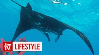 OFF THE BEAT: And now with the manta ray