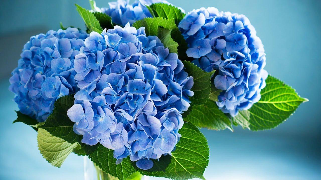 How to use hydrangeas in a centerpiece wedding flowers youtube