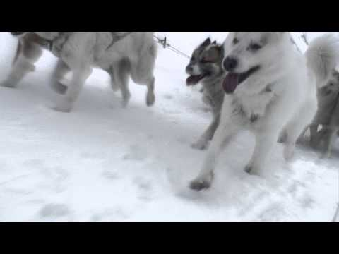 Dogsledging adventure in Greenland - HD