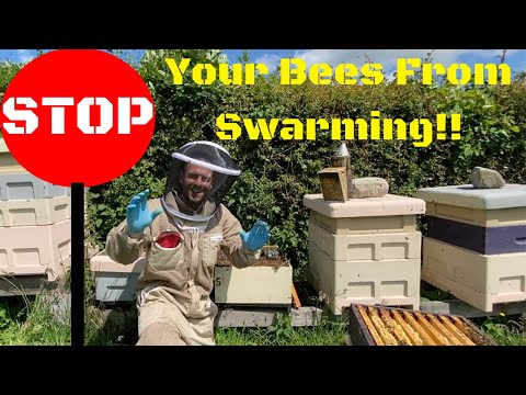 Stop Your Bees From Swarming. The Artificial Swarm
