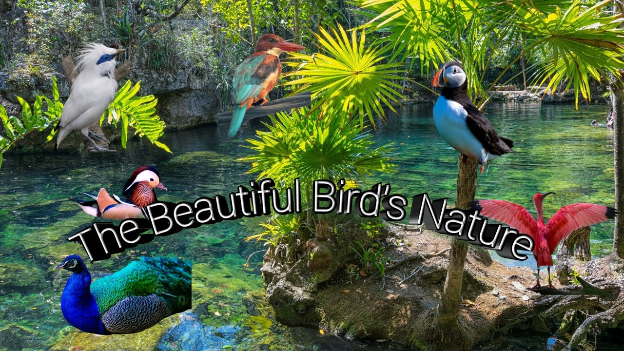 The beautiful Bird's nature and relaxing music-full HD