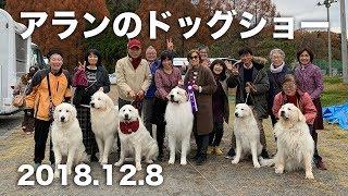 アランがドッグショー「神奈川北グレートピレニーズクラブ・第2グルー...