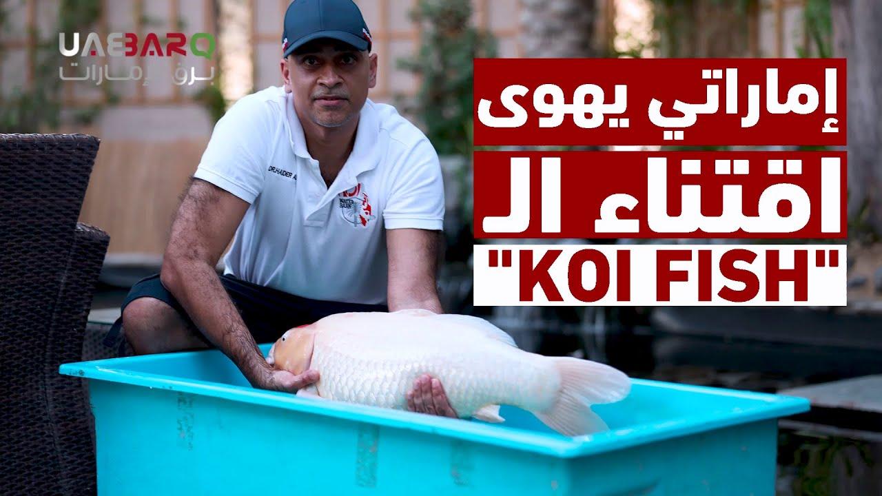 رجل إماراتي يهوى تربية أسماك الزينة الكوي Koi Fish