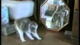 Cats get crazy / Kočkám hráblo