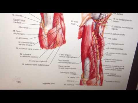 Перелом лучевой кости со смещением и без – реабилитация и