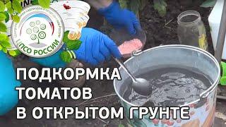 Чем удобрять помидоры. Подкормка томатов в открытом грунте .(В этом ролике - инструкция о том, как следует проводить подкормку томатов в открытом грунте. Как провести..., 2015-06-22T09:05:22.000Z)