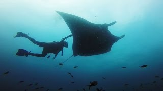 Roberto ochoa dives with giant manta rays near ayangue, ecuador.for more information check out:http://www.diveinecuador.comshot 100% on the hero3+® camera fr...