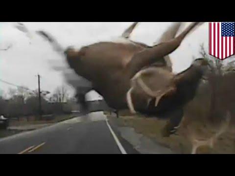 Cop car hits deer - Dashcam from Kenton...