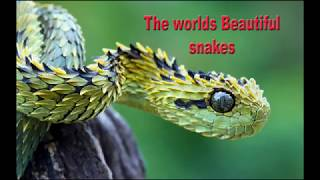 worlds most Beautiful snakes on earth