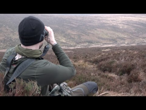 The Shooting Show - night-and-day sika stalking in County Wicklow