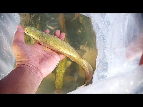 cách xây hồ nuôi cá hải tượng