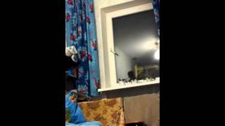 Это пипец мальчик варует носки(, 2013-12-28T16:35:53.000Z)