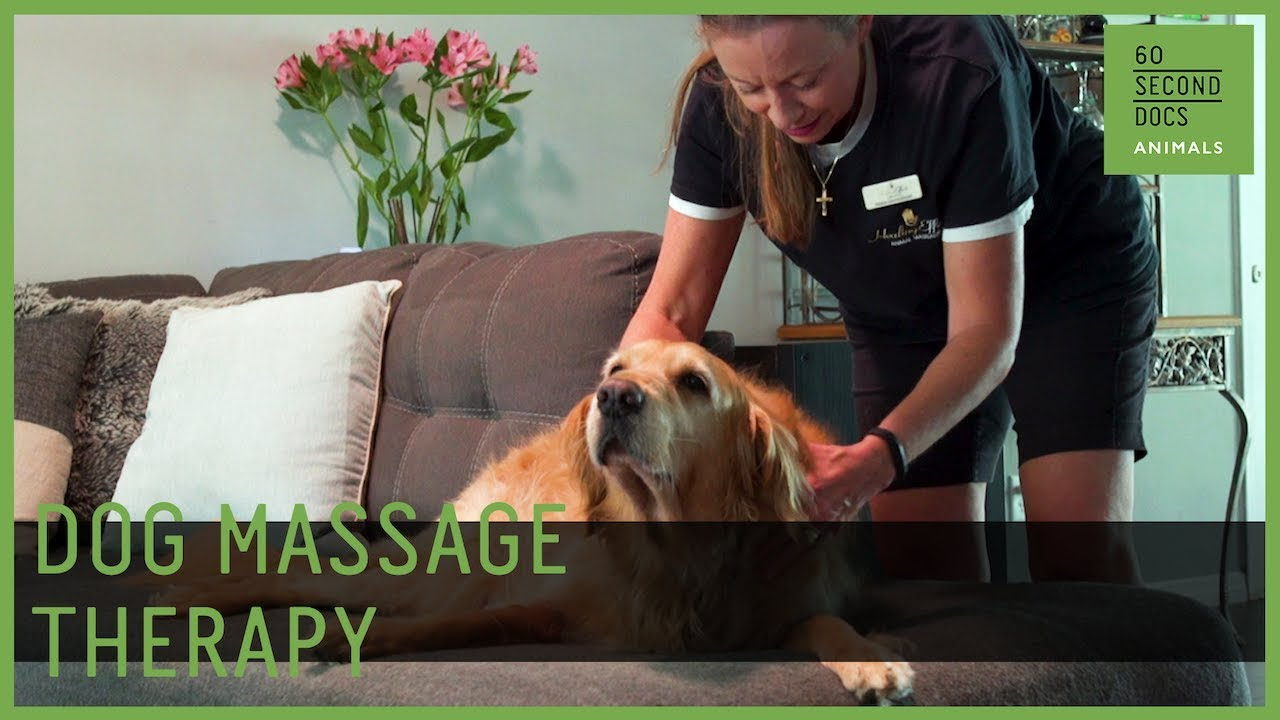 Professional Massage Therapy For Dogs