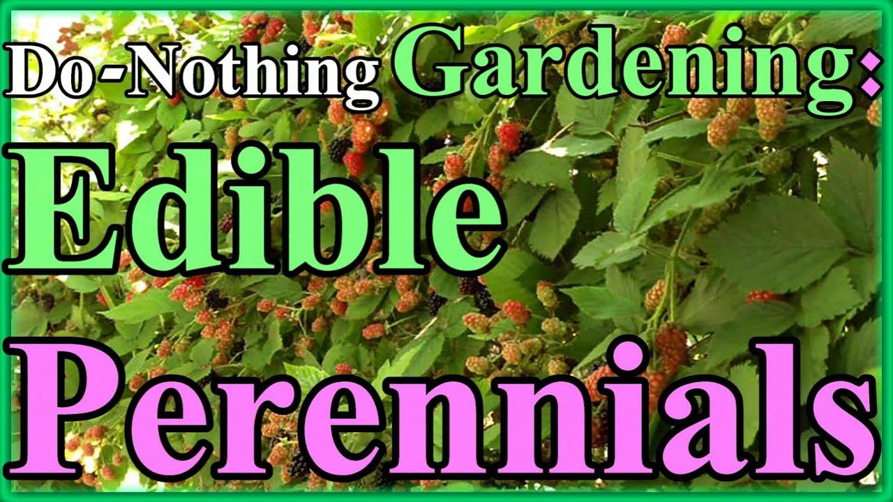 Toward a do nothing gardening pt 2 edible perennials lazy toward a do nothing gardening pt 2 edible perennials lazy gardening youtube mightylinksfo