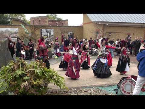 400 Roses at Knaresborough Charming Maid