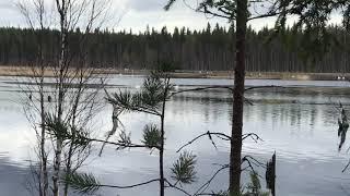 Нашёл лебединое озеро