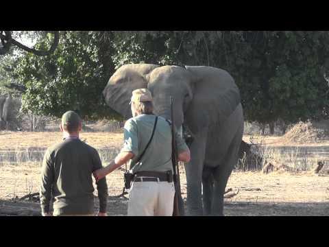 Mana Pools, Goliath Safaris: Stretch Ferreira + Steve with charging Elephant