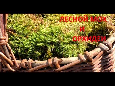 Лесной мох для орхидей.  Реакция растений.  Ответы на вопросы.