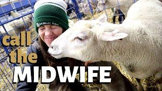 2-backward-lamb-deliveries-1-stillborn-delivery-fostered-a-lamb-fixed-a-lamb-s-foot-vlog-207