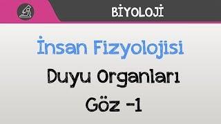 İnsan Fizyolojisi - Duyu Organları - Göz -1