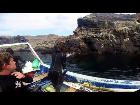 Scuba Dive Chile 2016