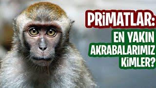 Primatlar: İnsanın Yaşayan En Yakın Akrabaları