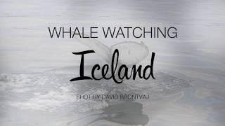 Video Whale watching Iceland - Husavik 2017 download MP3, 3GP, MP4, WEBM, AVI, FLV Desember 2017