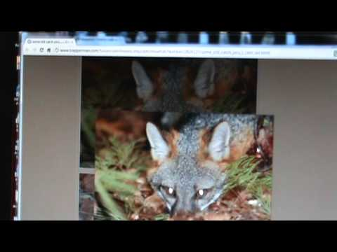 Trappers are liars, they accuse me of photoshopping to defend trapping