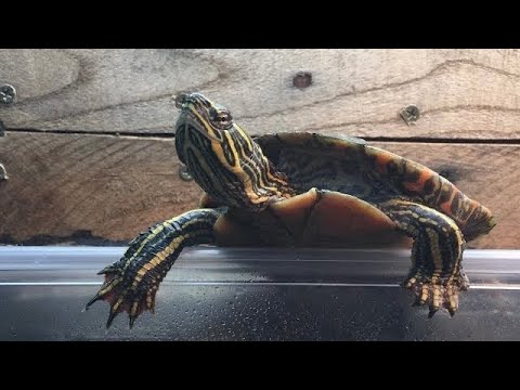 COMPLETE CARE GUIDE - The Painted Turtle