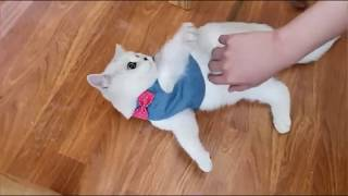 Шлейка-жилет для кошки или маленькой собачки