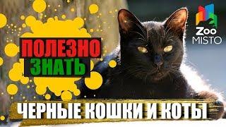 Полезно знать с ZooMISTO | Черные коты и кошки
