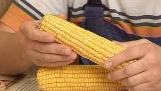Разумный огород. Кукуруза